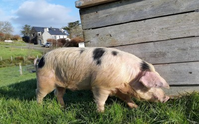 Things to do around West Cork with Kids (part 4) Loughbeg Farm